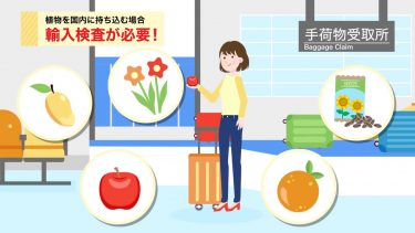 動画制作事例:農林水産省植物防疫所(テレビ朝日映像株式会社)